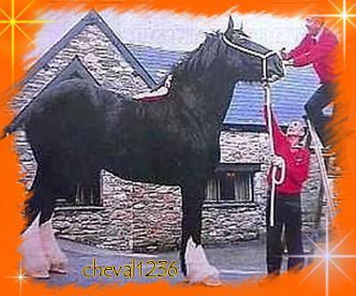 le cheval le plus grand au monde la passion du cheval. Black Bedroom Furniture Sets. Home Design Ideas